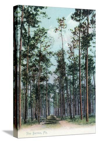 Florida - View of Pine Barrens-Lantern Press-Stretched Canvas Print