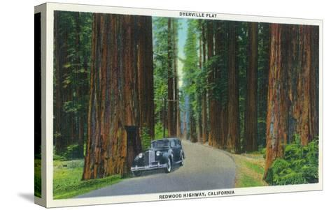 California - Dyerville Flat Scene on the Redwood Highway-Lantern Press-Stretched Canvas Print