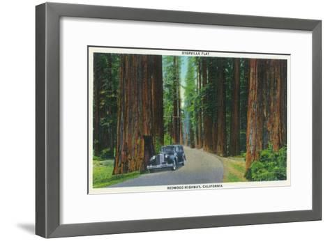 California - Dyerville Flat Scene on the Redwood Highway-Lantern Press-Framed Art Print