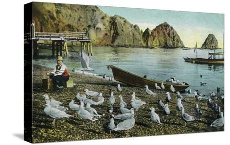 Santa Catalina Island, California - View of Sea Gulls at Avalon-Lantern Press-Stretched Canvas Print