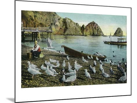 Santa Catalina Island, California - View of Sea Gulls at Avalon-Lantern Press-Mounted Art Print