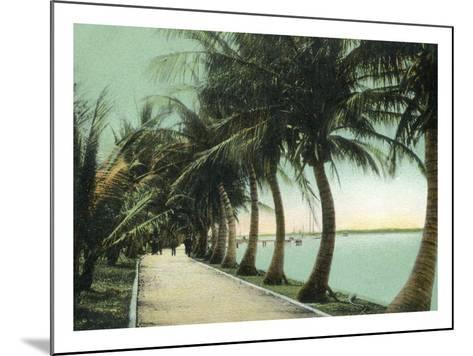 Palm Beach, Florida - Palm Walk Along Lake Worth-Lantern Press-Mounted Art Print