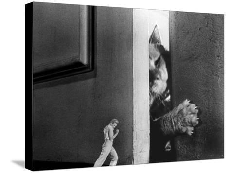 The Incredible Shrinking Man, Grant Williams, 1957--Stretched Canvas Print