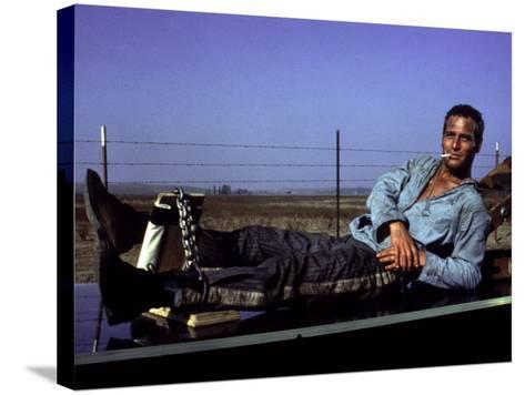 Cool Hand Luke, Paul Newman, 1967, Leg Irons--Stretched Canvas Print