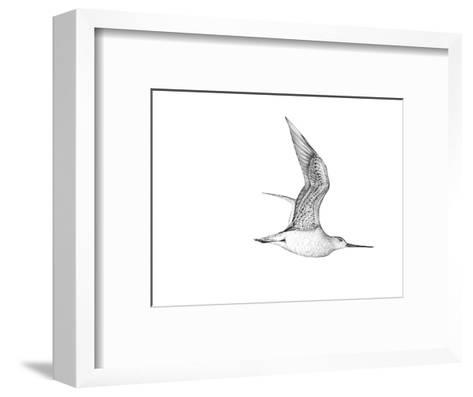 Bartailed Godwit-Jane Kim-Framed Art Print