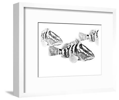Nassau Grouper-Jane Kim-Framed Art Print