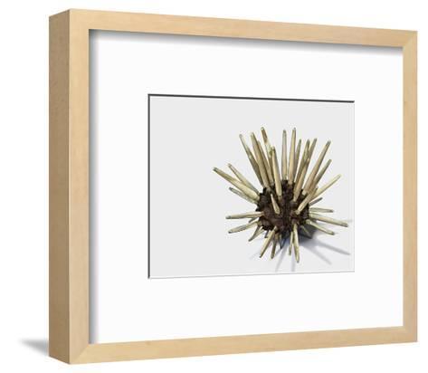 Pencil Urchin-Jane Kim-Framed Art Print