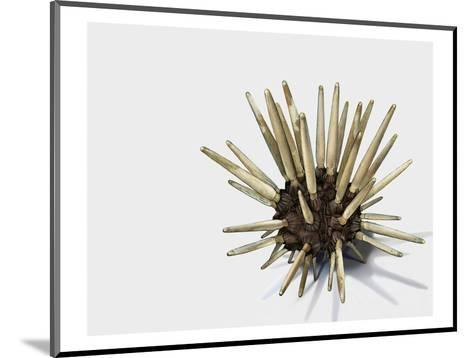 Pencil Urchin-Jane Kim-Mounted Premium Giclee Print