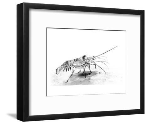 Spiny Lobster-Jane Kim-Framed Art Print