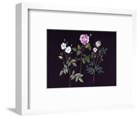 Wild Roses-Jane Kim-Framed Art Print