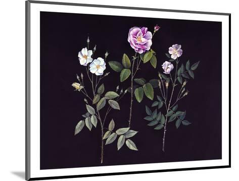 Wild Roses-Jane Kim-Mounted Premium Giclee Print
