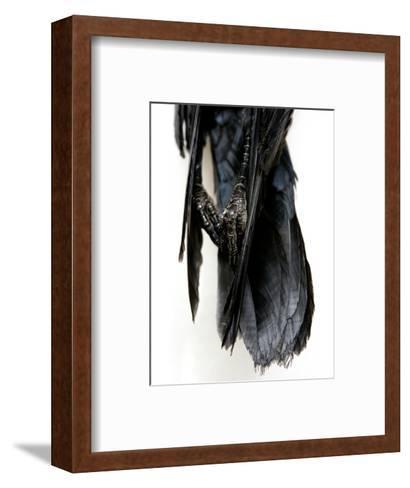 Crow Feet-Judy Tuwaletstiwa-Framed Art Print