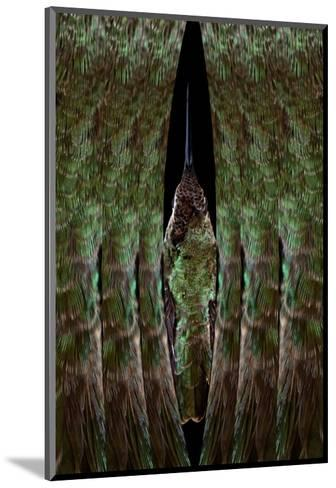 Hummingbird-Judy Tuwaletstiwa-Mounted Premium Giclee Print