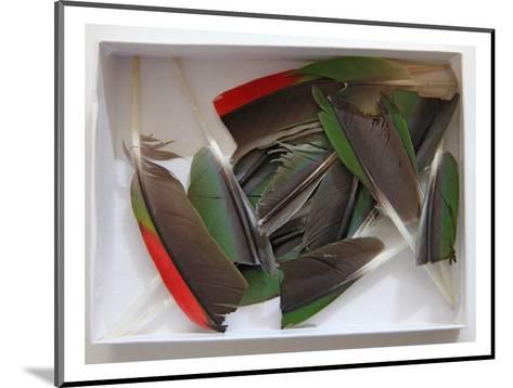 Parrot Feathers, no. 1-Judy Tuwaletstiwa-Mounted Premium Giclee Print