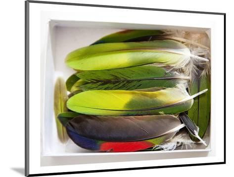 Parrot Feathers, no. 2-Judy Tuwaletstiwa-Mounted Premium Giclee Print