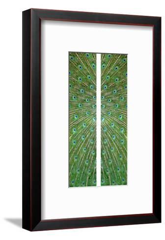 Peacock-Judy Tuwaletstiwa-Framed Art Print