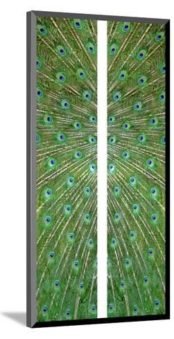 Peacock-Judy Tuwaletstiwa-Mounted Premium Giclee Print