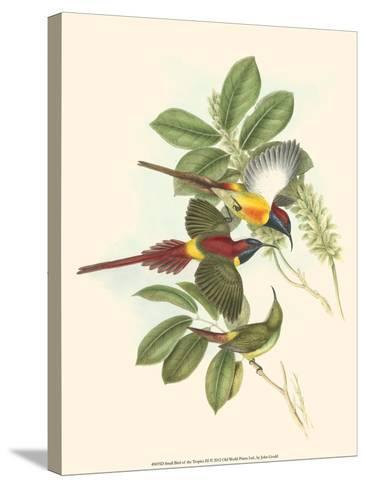Small Bird of the Tropics III-John Gould-Stretched Canvas Print