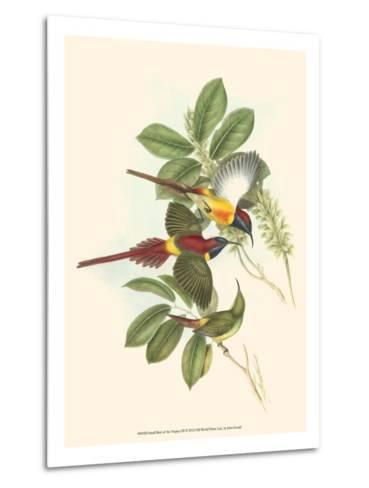 Small Bird of the Tropics III-John Gould-Metal Print
