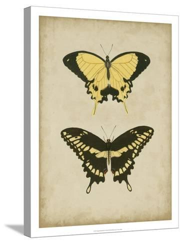 Antique Butterfly Pair I-Vision Studio-Stretched Canvas Print
