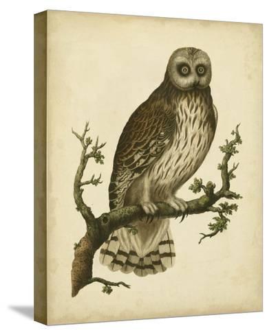 Antique Nozeman Owl II-Nozeman-Stretched Canvas Print