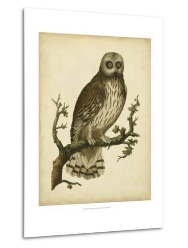 Antique Nozeman Owl II-Nozeman-Metal Print