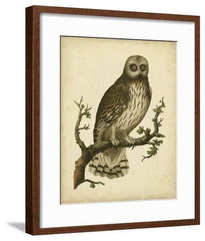 Antique Nozeman Owl II-Nozeman-Framed Art Print