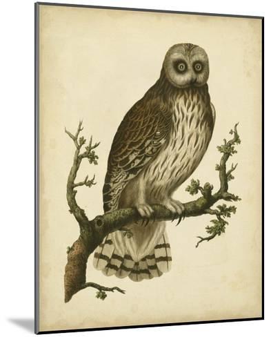 Antique Nozeman Owl II-Nozeman-Mounted Art Print
