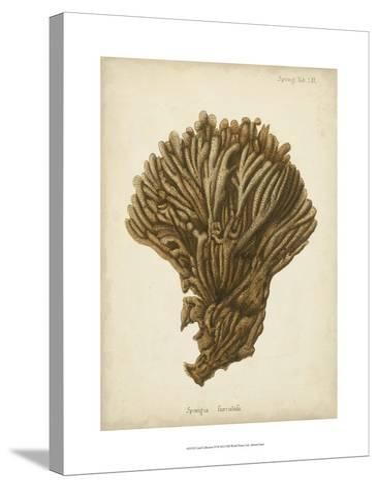 Coral Collection VI-Johann Esper-Stretched Canvas Print