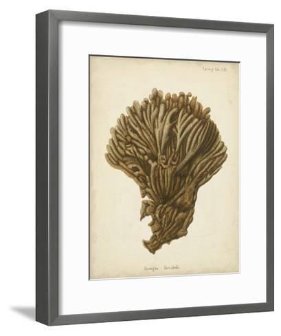 Coral Collection VI-Johann Esper-Framed Art Print