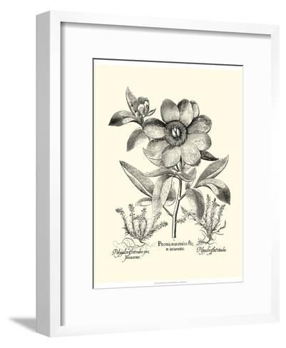 Black and White Besler Peony I-Besler Basilius-Framed Art Print