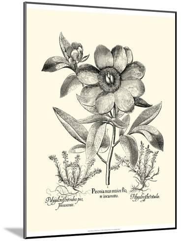 Black and White Besler Peony I-Besler Basilius-Mounted Art Print