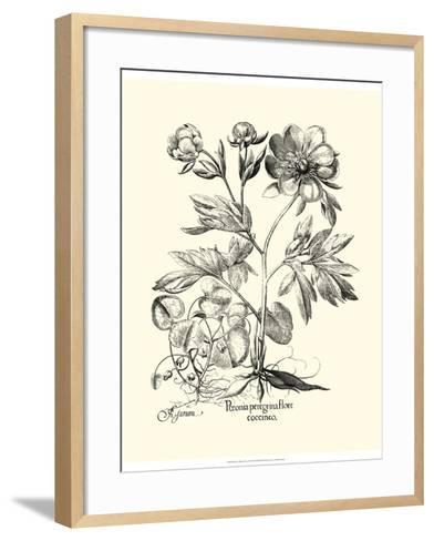 Black and White Besler Peony III-Besler Basilius-Framed Art Print