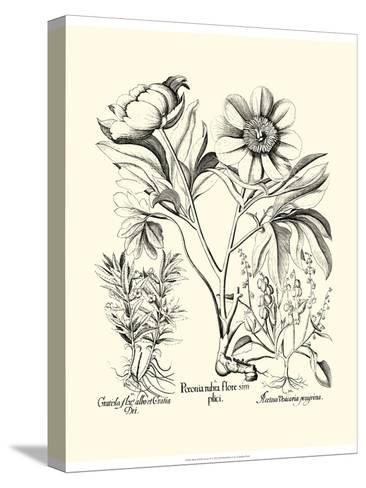 Black and White Besler Peony IV-Besler Basilius-Stretched Canvas Print