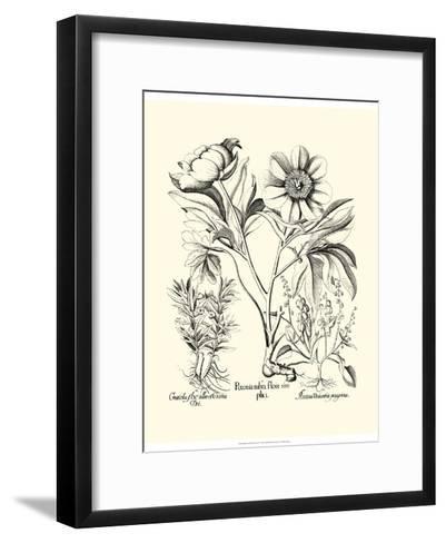 Black and White Besler Peony IV-Besler Basilius-Framed Art Print
