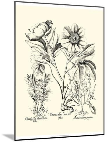 Black and White Besler Peony IV-Besler Basilius-Mounted Art Print