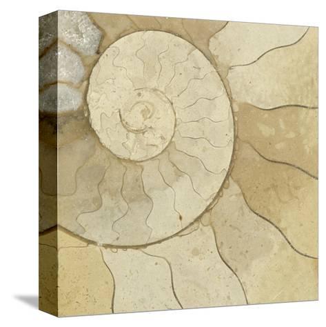 Organic Elements V-Vision Studio-Stretched Canvas Print