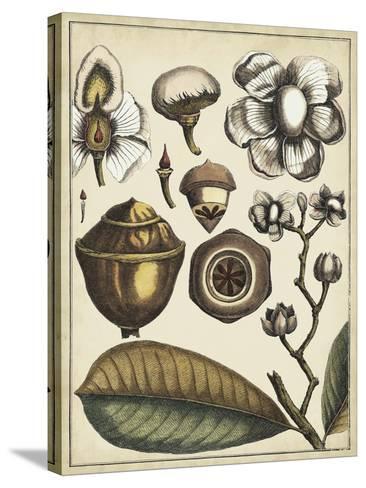 Ivory Botanical Study VI-Vision Studio-Stretched Canvas Print