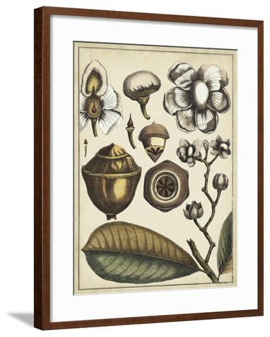 Ivory Botanical Study VI-Vision Studio-Framed Art Print