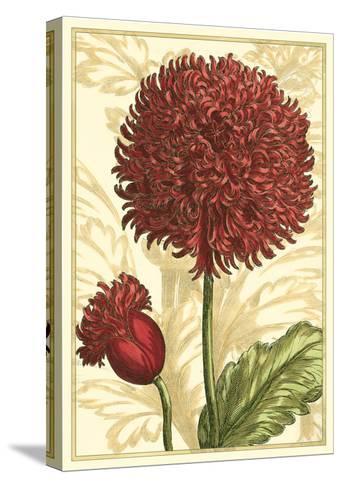 Peony Passion II-Johann DeBry-Stretched Canvas Print