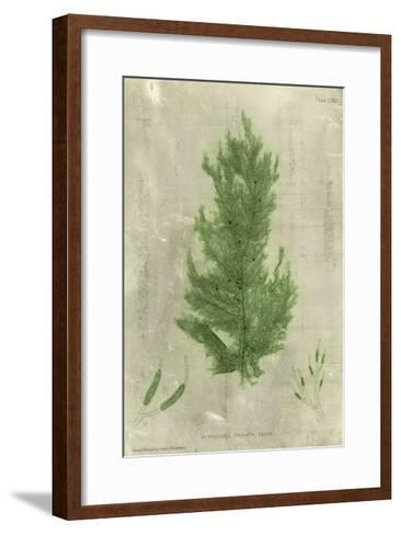 Emerald Seaweed I--Framed Art Print