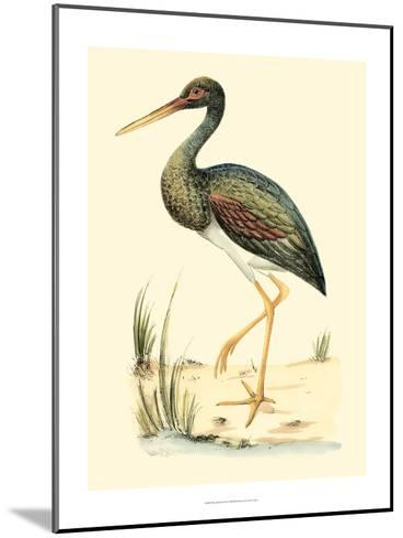 Water Birds II-Meyer H^l^-Mounted Art Print