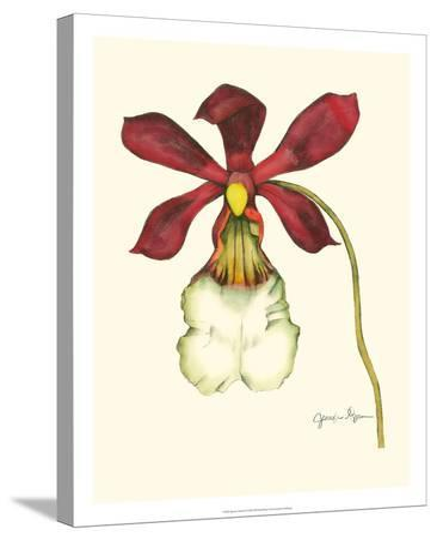 Majestic Orchid II-Jennifer Goldberger-Stretched Canvas Print