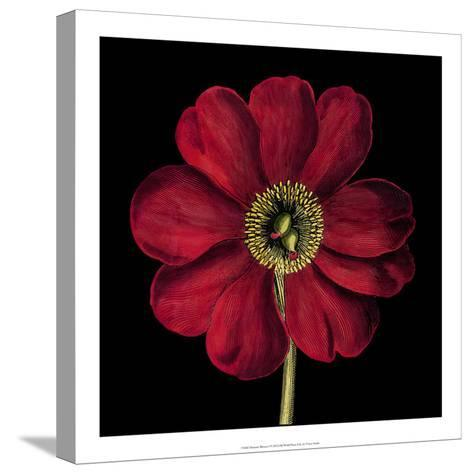 Dramatic Blooms I-Vision Studio-Stretched Canvas Print