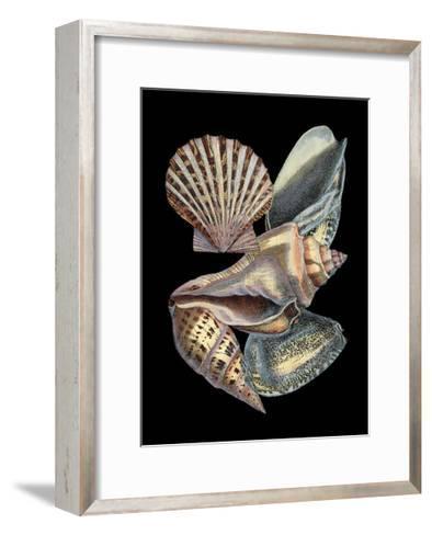 Treasures of the Sea II-Pierre-Joseph Redout?-Framed Art Print