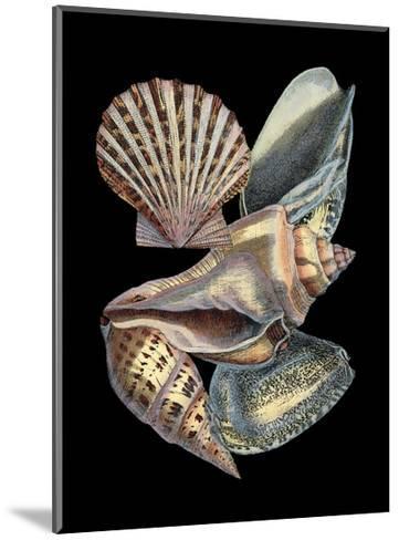 Treasures of the Sea II-Pierre-Joseph Redout?-Mounted Art Print