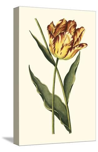 Vintage Tulips I-Vision Studio-Stretched Canvas Print