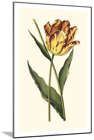 Vintage Tulips I-Vision Studio-Mounted Art Print