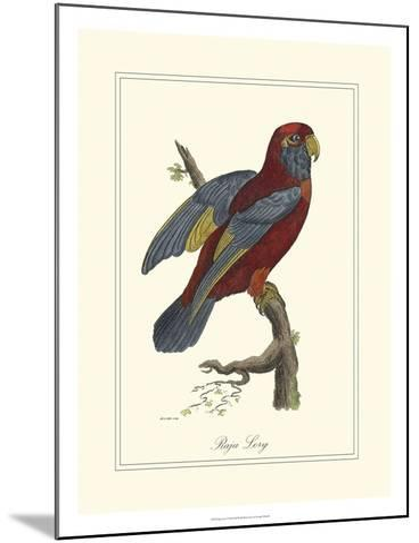 Raja Lory-George Edwards-Mounted Art Print