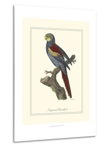 Nonpareil Parrakeet-George Edwards-Metal Print
